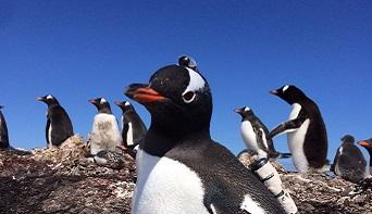 Penguin Cam